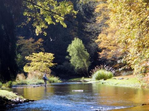 Spruce Creek Scenery